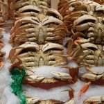 les crabes nous montrent leur dessous