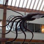 Sculpture d' un calamar