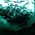 Aquarium au plafond